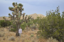 P132_Pinyon-Juniper2-JoshuaTree